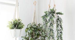37 Ideen für hängende Innenpflanzen zur Dekoration Ihres Zuhauses