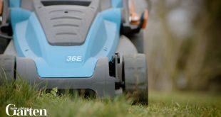 5 Tipps gegen Moos im Rasen