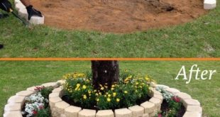DIY Tree Ring Planter Ideas to Beautify Your Outdoor