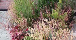 Siergrassen ed #Garten #garten #siergrassen
